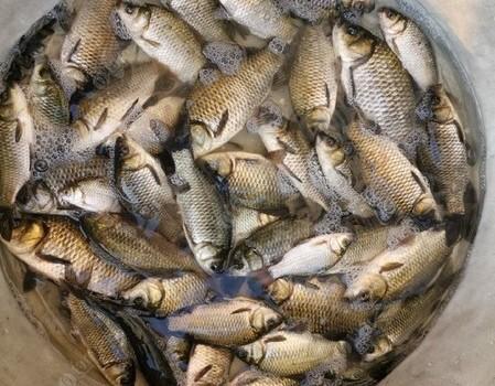 野塘探釣:好塘口被清塘,只得從頭探新塘