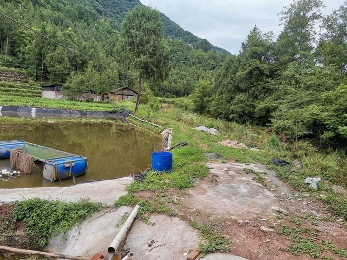 南江县檬子树蔬菜种养殖合作社