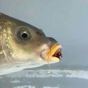 【钓技+台钓】春季垂钓鲫鱼出钓天气与影响鱼口的因素