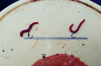 使用蚯蚓饵的两种调漂技巧