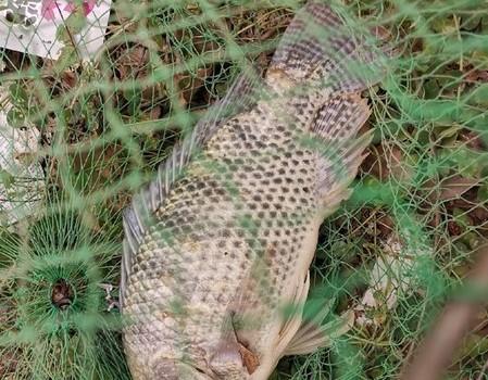 心情太激動了,有生以來釣到的第一條羅非魚