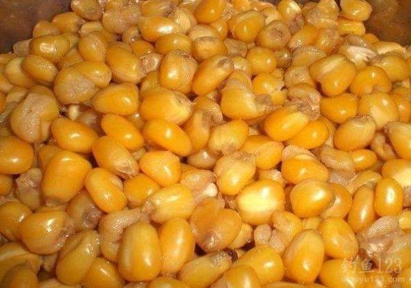 夏季玉米粒垂钓实用技巧