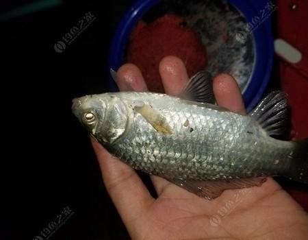化氏湛盧初下水,鯽魚成雙不單尾