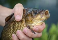 高手深秋水庫野釣鯽魚的三點建議