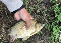 學會這幾招逗釣技巧 秋冬釣魚不用愁