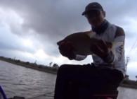 《麦子钓鱼》野河小鱼闹窝 草莓味饵料鲤鱼 鲫鱼连拔 意外钓获鳊鱼