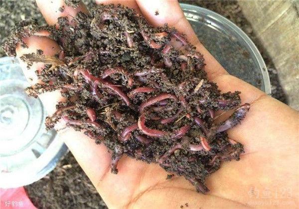 蚯蚓在土里