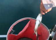《户外老曹》山清水秀深水筏钓,钓鱼人的享受!