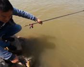 《浪秦路亞》路亞到20斤大鯉魚,只用2分鐘上岸