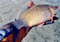 学会这些技巧,冬季钓鱼连竿不断!