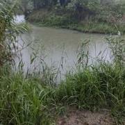 钓鱼瘾发作难忍耐,雨中野河去寻鲫。!