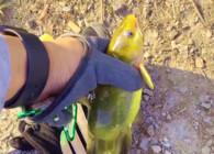 《麦子钓鱼》这种钓法可以边钓边玩手机,轻松钓获超大的黄辣丁!