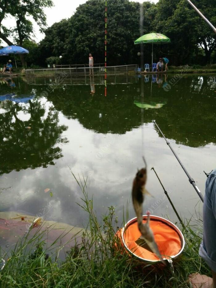 南山钓鱼俱乐部