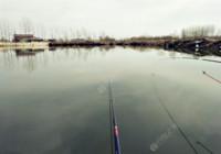 冬季釣鯽魚牢記這三點,不愁釣不到。