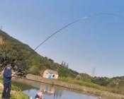 《麥子釣魚》用玉米翹嘴,魚竿要選軟,子細要略粗,這樣可以大小兼收