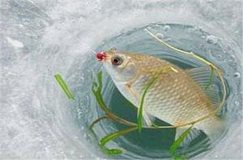 冬钓鲫鱼了解这些情况,让钓鱼变得更简单!