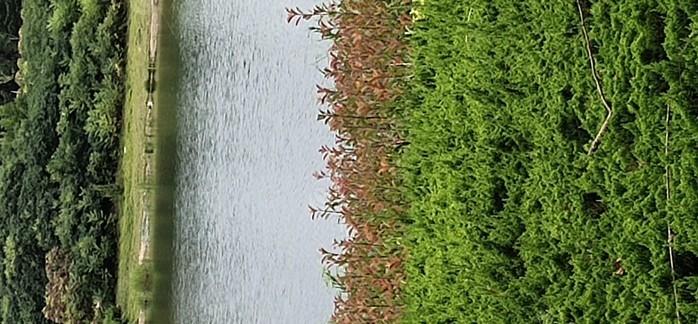 黄金河生态园