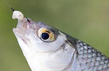 冬季野釣魚口輕,教你如何解決!