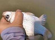 《麦子钓鱼》钓鱼实战:冬季反常气温还能钓到鱼吗?