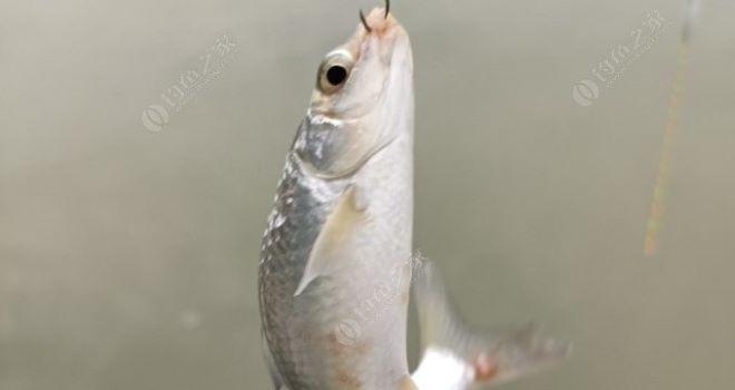龙8pt老虎机在线娱乐过五一:早一场,晚一场,终获目标鱼种……