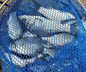 冬季釣鯽魚,這樣選擇釣位幫你事半功倍!