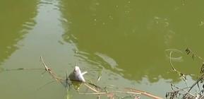 《户外野钓视频》 在10米宽的小河钓鱼,环境真安逸,上的鱼也都是极品