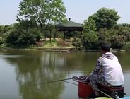 《戶外老曹》5小時至少要上魚50斤,老曹挑戰混養塘,快來圍觀!