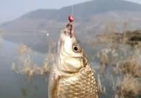 夏季釣鯽魚技巧
