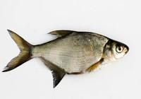 秋钓鳊鱼听听有哪些学问