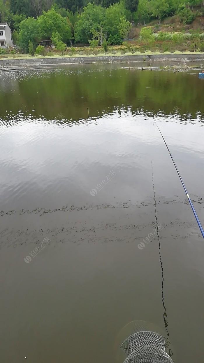洛神沟鱼塘