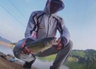 《麥子釣魚》這樣釣鱸魚 鱖魚比路亞更有效