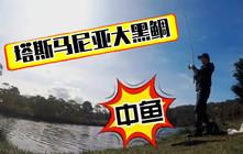 《全球钓鱼集锦》塔斯马尼亚大黑鲷鱼藏匿河道,女钓手大喊手要断了!