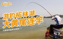 《白条游钓》亚洲第一土坝柘林湖,据说大黄尾有3斤重,白条真能遇到吗?