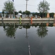 自钓黑坑鲤鱼经验分享