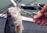 《钓鱼百科》 第九十五集 什么是控鱼器?