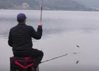 《麥子釣魚》同窩同餌同釣點 魚情完全不一樣這是為什么?