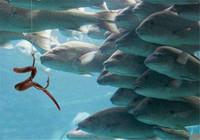 如何留窩聚魚 須看這四點