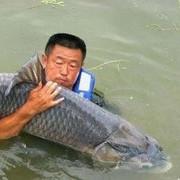 要想鱼上岸 得凭粮食换 大毛老师的话余音绕梁颇有感触 为啥…