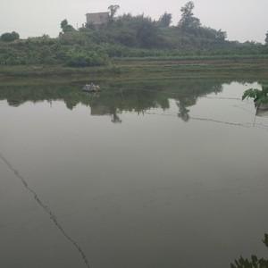 长安湖生态钓场
