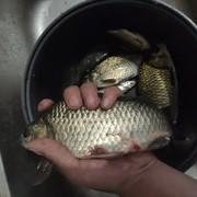 秋季線組搭配技巧:要根據魚口信號作出調整,一成不變魚難釣