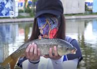 《钓鱼百科》 第103集 什么是生口鱼?