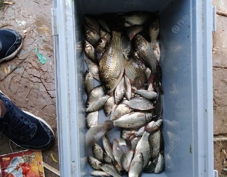 钓光水库的鱼第16天有感