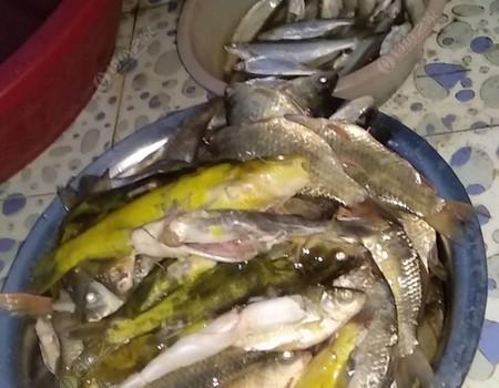 上周五夜战獾子沟鱼获35+意外收获过斤野生鲫花鱼