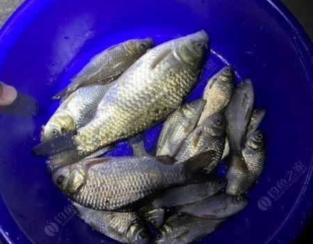 银光闪闪如明镜,忙里偷闲解鱼瘾。