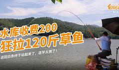 《白條游釣》深山水庫大物橫行,連竿狂拉120斤,這個釣法絕了!