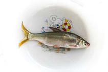 黃尾魚很多人都釣過 學會這套技巧無人能及