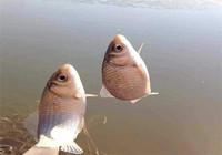 有鱼顶漂却提不上鱼,多半是这些原因!