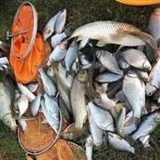 【学钓技】春季钓鱼绝杀技巧:三种天气三种钓位,连竿上鱼不是事