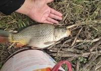 ?野釣鯉魚找釣位的技巧