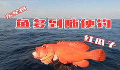 《全球釣魚集錦》紅斑、東星斑紅瓜子爭先恐后上船來,魚多多隨便釣!